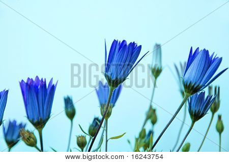 close up of a few blue wildflowers