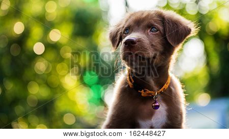 Puppy With Sunset Bokeh Background