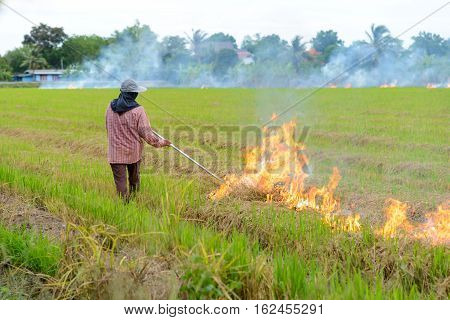 Thai farmers are burning straw stubble farmers when the harvest is complete. another cause of global warming
