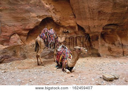 Camels Siq canyon in Petra lost city in Jordan. Famous UNESCO heritage site