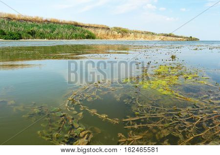 Swamp landscape. Ukraine. Beautiful landscape. Small river