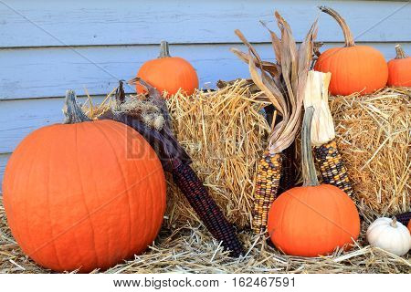 Seasonal Fall Decoration for Harvest and Thanksgiving from Bales of Hay Maize (corn on knob Indian corn) Orange and White mini Pumpkins with (long) stem in front of gray wooden wall