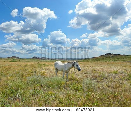 White horse grazing on the steppe. National Park
