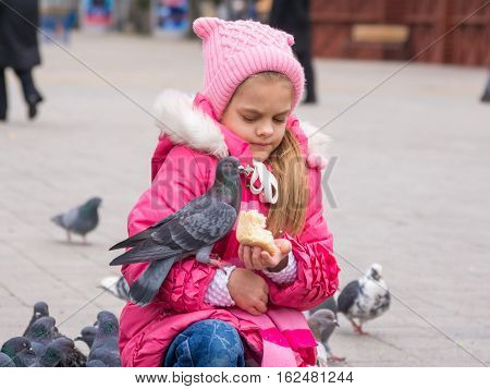 The Girl Was Frightened Brazen Pigeon Who Jumped Into His Arms For A Crust Of Bread