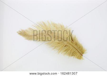 Beige bird feather isolated on white background