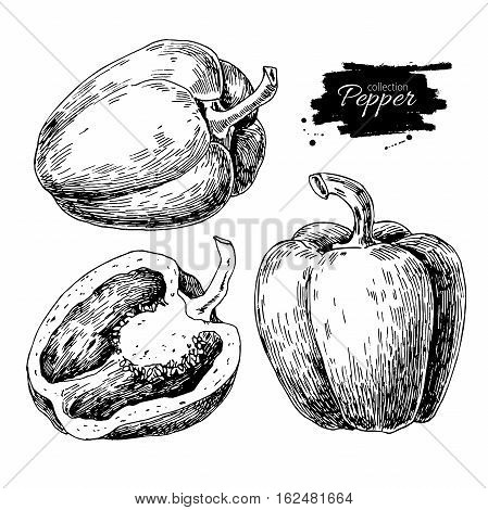 Pepper hand drawn vector set. Vegetable engraved style object, full and half. Isolated bell pepper. Detailed vegetarian food drawing. Farm market product. Paprika icon