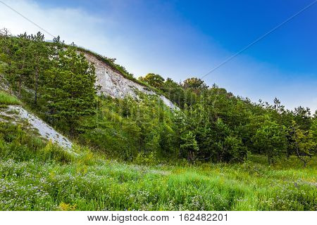Young pine trees at the foot of the chalk hills. The archaeological monument - Krapivinskaya settlement Belgorod region Russia.