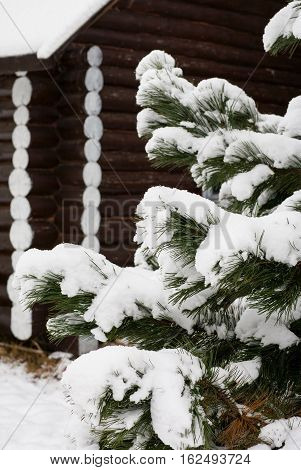 The walls of the wooden log cabins of logs and brown, spruce covered with snow, background