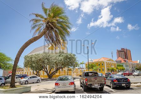Palm Tree Alone In Curacao City Center