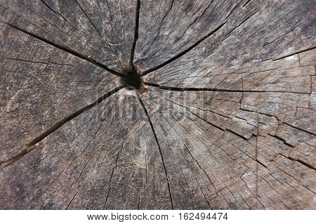 Abstract texture of tree stump crack wood ancient
