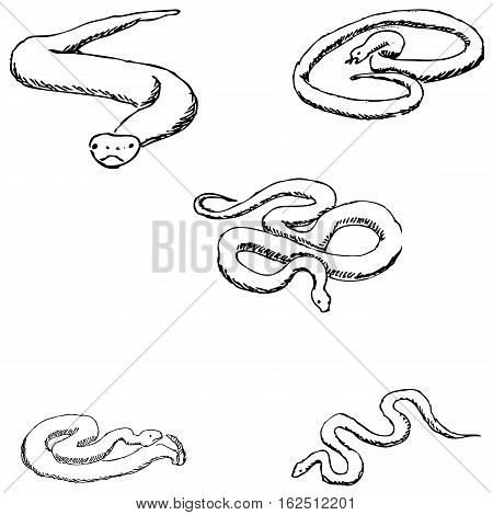 Snakes. A sketch by hand. Pencil drawing. Vector image