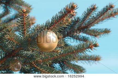 Beautiful Yellow Toy On A Branch Of Pine