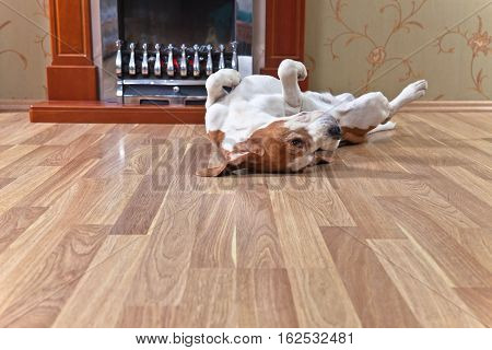 Resting Dog On Wooden Floor