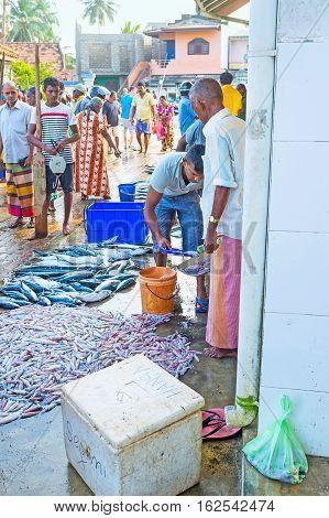 HIKKADUWA SRI LANKA - DECEMBER 5 2016: The fishmonger weighs the squids at the fishing market on December 5 in Hikkaduwa.