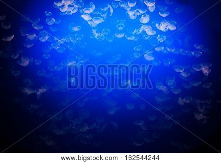 Beautiful blue moon jelly fish in an underwater scene.