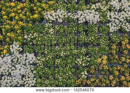beautiful Flower wall in the garden for background .