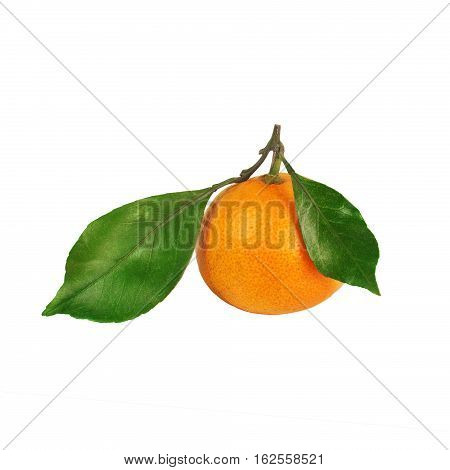Tangerine With Two Leaves