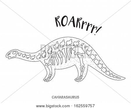 Camarasaurus skeleton outline drawing. Fossil of a camarasaurus dinosaur skeleton. Coloring book page