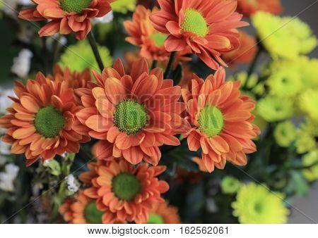A group of beautiful orange flowers in bloom.