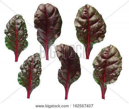 Set Of Chard (silverbeet, Mangold) Leaves, Paths
