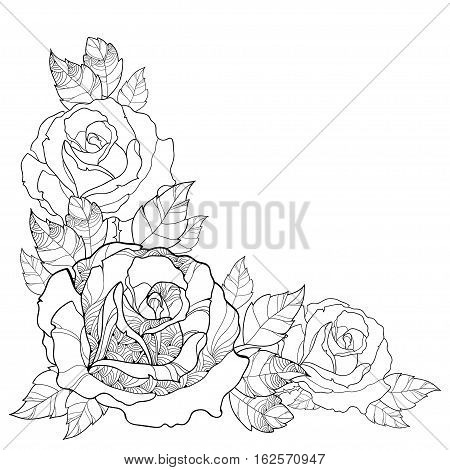 Vector illustration with outline rose flower and foliage isolated on white background. Floral elements with roses and leaves in contour style for summer design and coloring book. Corner composition.