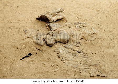 Dinosaur bones in the nature reserve Ischigualasto also calles Valle de la Luna in the area of San Juan in Argentina South America