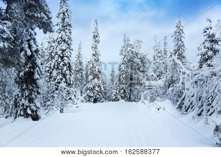 beautiful snowy forest landscape in Finland Lapland