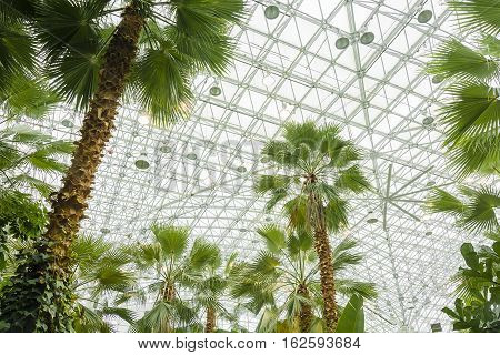 Chicago IL USA october 28 2016: Palm House of the Navy Pier in Chicago Illinois