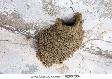 Common house martin mud nest under the eave of house