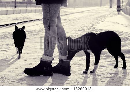 Street dogs on railway station. Puppy sniffing women's shoes. Sunny winter day. Animal silhouette in backlight. Toned black and white color processing. Nice soft warm light