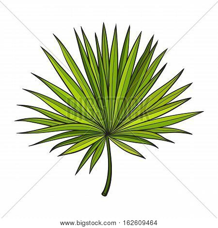 Full fresh fan shaped leaf of palmetto tree, sketch style vector illustration isolated on white background. Realistic hand drawing of palmetto palm tree leaf, jungle forest design element