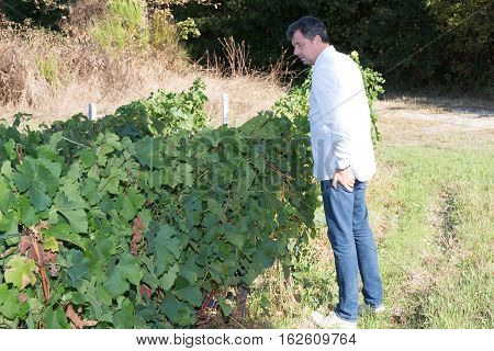 professional man of wine in vineyard looking grower