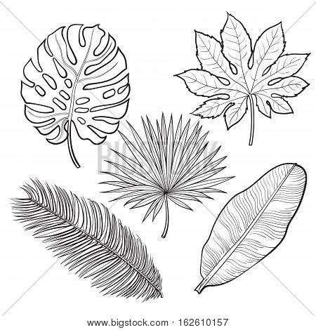 Set of tropical palm leaves, sketch style vector illustration isolated on white background. Realistic hand drawings of monstera, banana, palm trees as jungle, tropical forest design elements