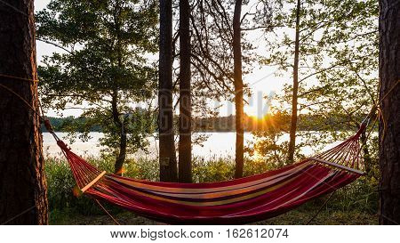 Hammock In Trees