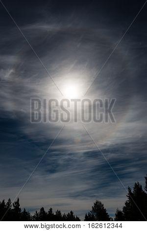Dark Sky Over Trees With Sun Halo