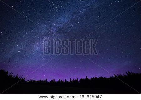 Blue Dark Night Sky With Stars Above Of Trees.