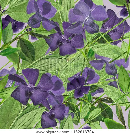 Periwinkle. Colorful texture of pressed dry flowers. Seamless pattern for continuous replicate. Beautiful photo collage.