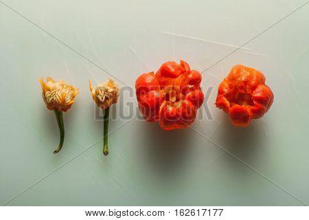 Red Hot Carribean scotch bonnet chili pepper