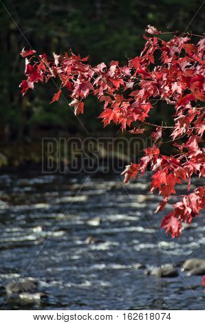 One of a series of pictures of the lakes and rivers of upstate New York in the Autumn.