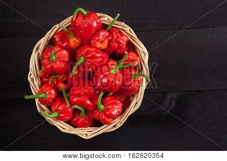 Red hot Trinidad moruga scorpion peppers in a basket on black background