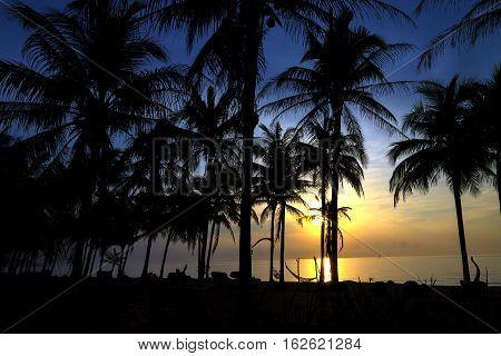 Silhouette coconut with sunrise at Ban Krut Beach Prachuap Khirikhun Province Thailand