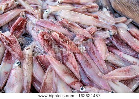 Fresh raw squid at fish market in Asia