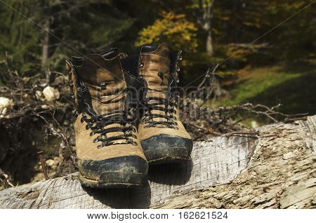 Old shoes on a cut tree with nails