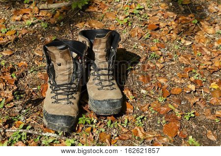 Tourist hiking shoes and autumn leaves in the woods