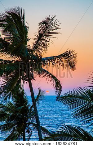 Palms on the ocean at sunset, Anjuna, India