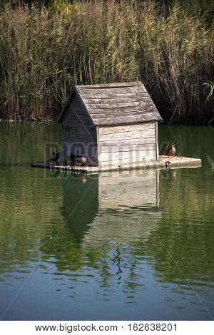 wooden duck house floating at the pond
