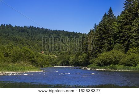 Striy river at the Carpathian spruce forest in Ukraine