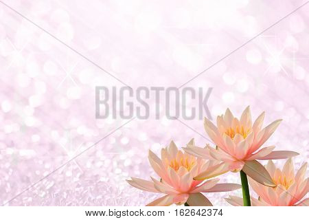 Pink lotus or pink water lily on pink light of bokeh abstract as background image for design and other.