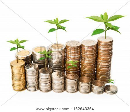 Plant growing from coins investment concept on white.