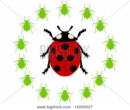 Detailed and colorful illustration of ladybird diet poster